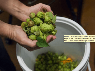 Beer Run: Rush on Mosaic hops illustrates hot hops market
