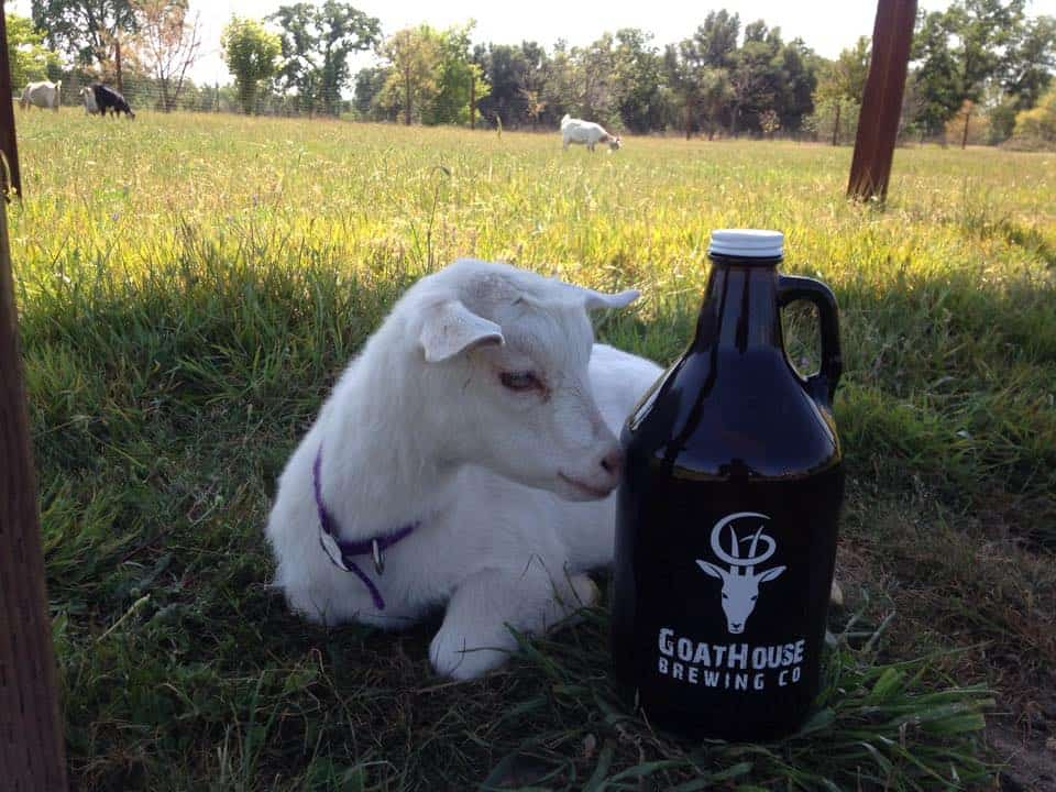 Goat and beer